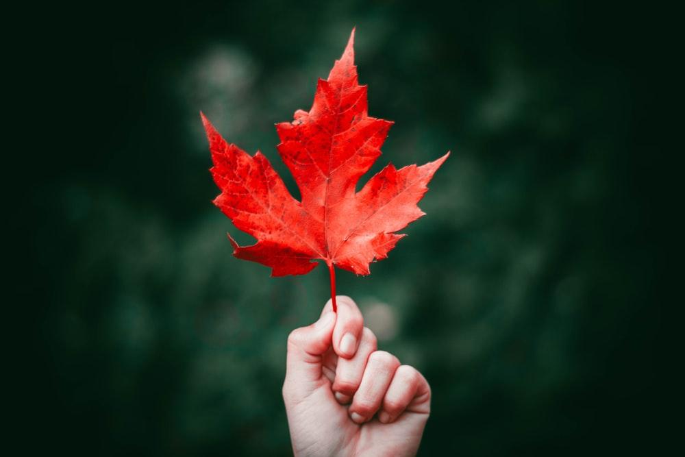 British Columbia PNP Issued new invitations